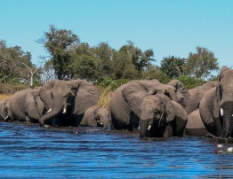 feature-chobe-wildlife-photography-course-2