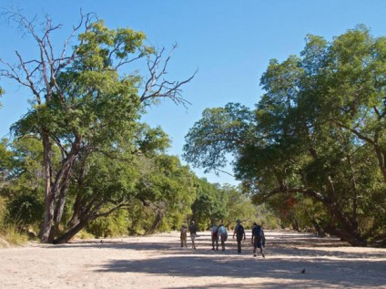 walking safari South Luangwa, Zambia
