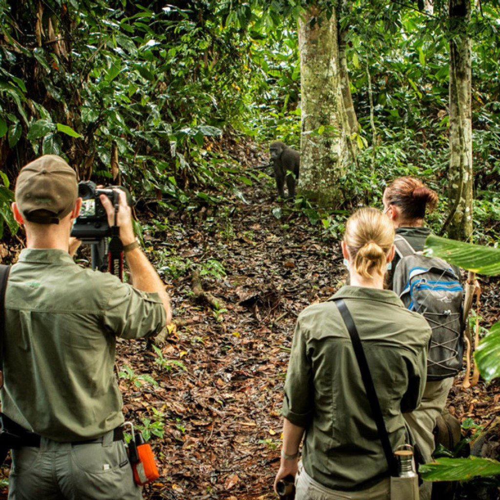 Trekking for lowland gorrilas in Odzala-Kokoua National Park, Congo