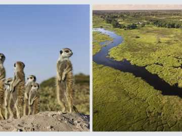 Desert and Delta, an Africa Geographic safari