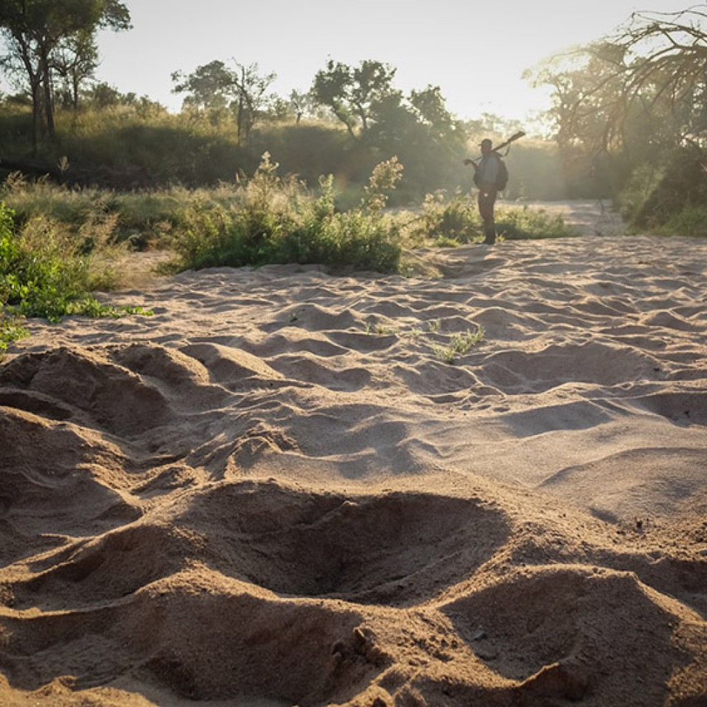 Walking safari in a Kruger National Park private concession