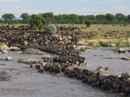 Maasai Mara River crossing during Africa Geographic safari