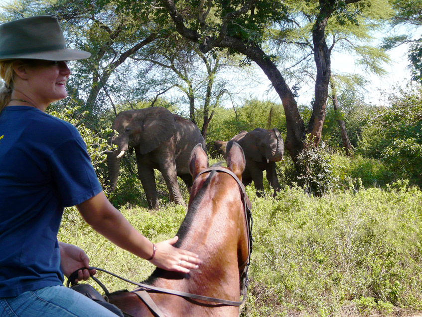 Horse riding in Victoria Falls with Africa Geographic