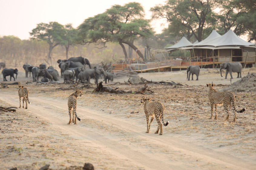 Read a traveller account of how to enjoy Hwange and make a difference. ©African Bush Camps