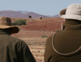 Damaraland, Namibia - black rhino tracking