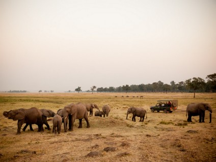 Elephants in the Maasai Mara National Reserve, Kenya