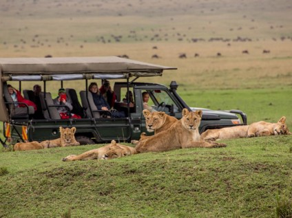 Marsh lion pride, safari, wildlife, Maasai Mara National Reserve, Kenya