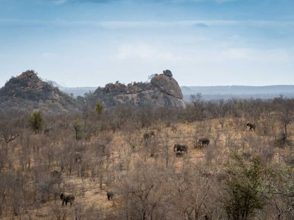 Kruger wilderness walking safari, Africa Geographic - Balule landscape