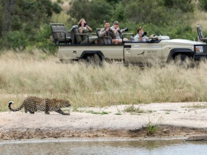 Photographic safari guests watch leopard stalking in Sabi Sands, Greater Kruger