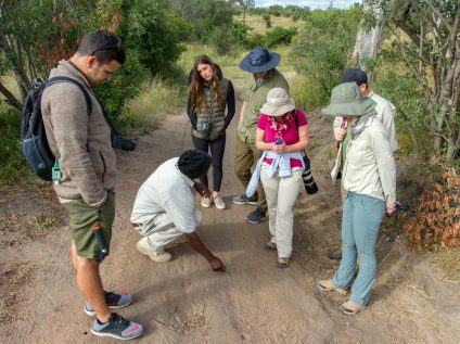 Photographic safari guests tracking spoor in Sabi Sands, Greater Kruger