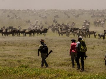 Serengeti walking safari with Africa Geographic