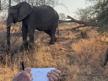 Art on safari with Africa Geographic