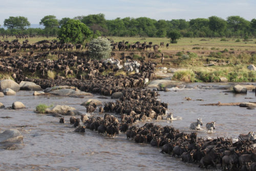 Maasai Mara with Africa Geographic