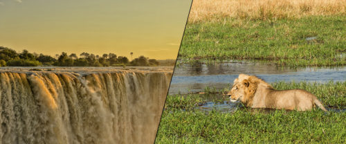 Botswana wildlife and Victoria Falls with Africa Geographic