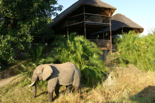 Elephant on safari with Africa Geographic